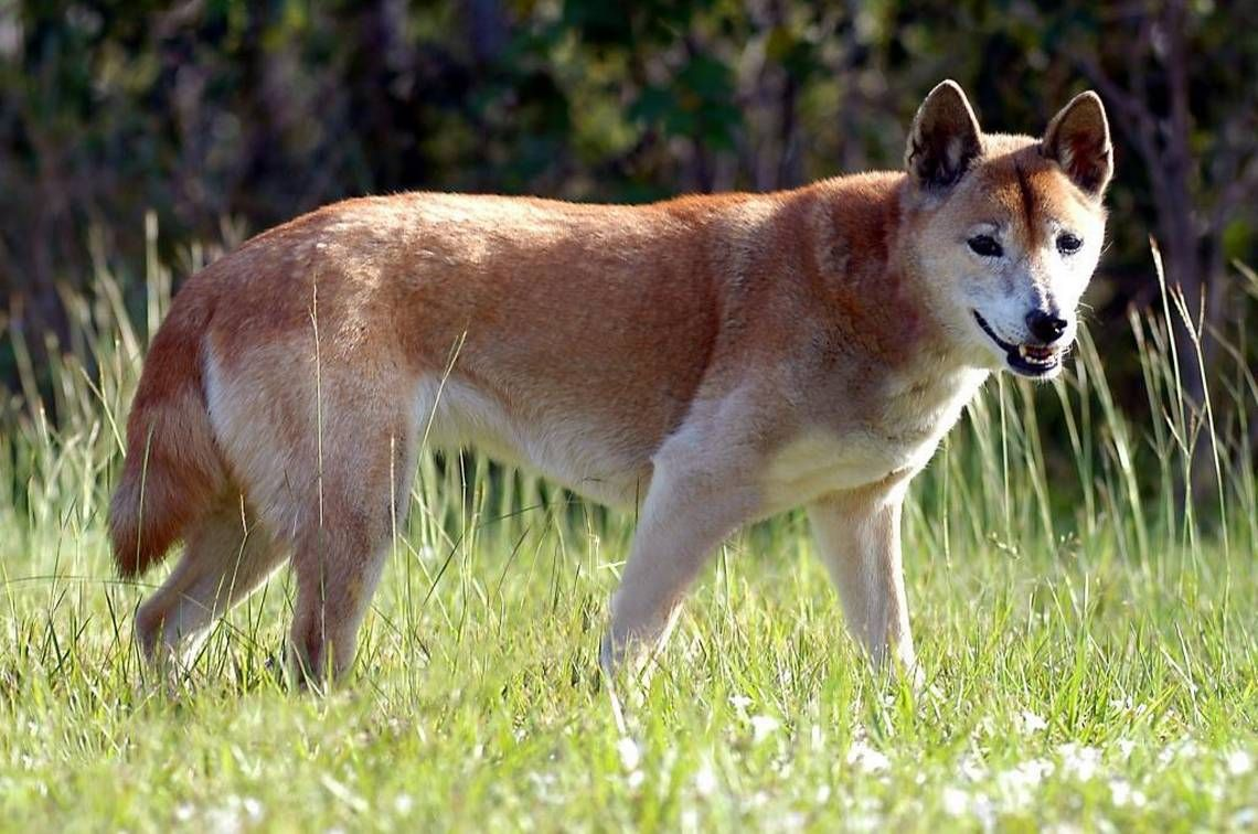 10 Dog Breeds With A Higher Life Expectancy Dog Breeds Dogs Top 10 Dog Breeds