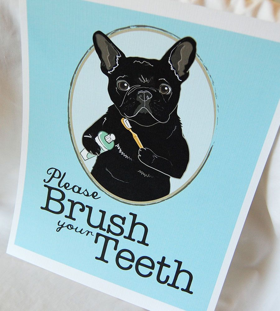 Simba French Bulldog 11 Y O A Couple Of Missing Teeth And Some