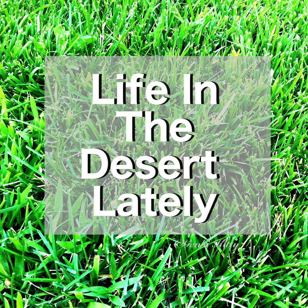 Life in the California Desert