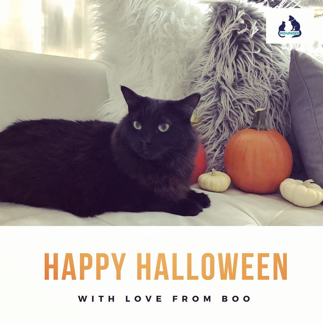Happy Halloween from BOO and the MO4PAWS team. 🐾🎃 The