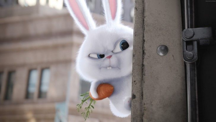 Snowball The Secret Life Of Pets Movie 3840x2160 ส ตว แอน เมช น ด สน ย