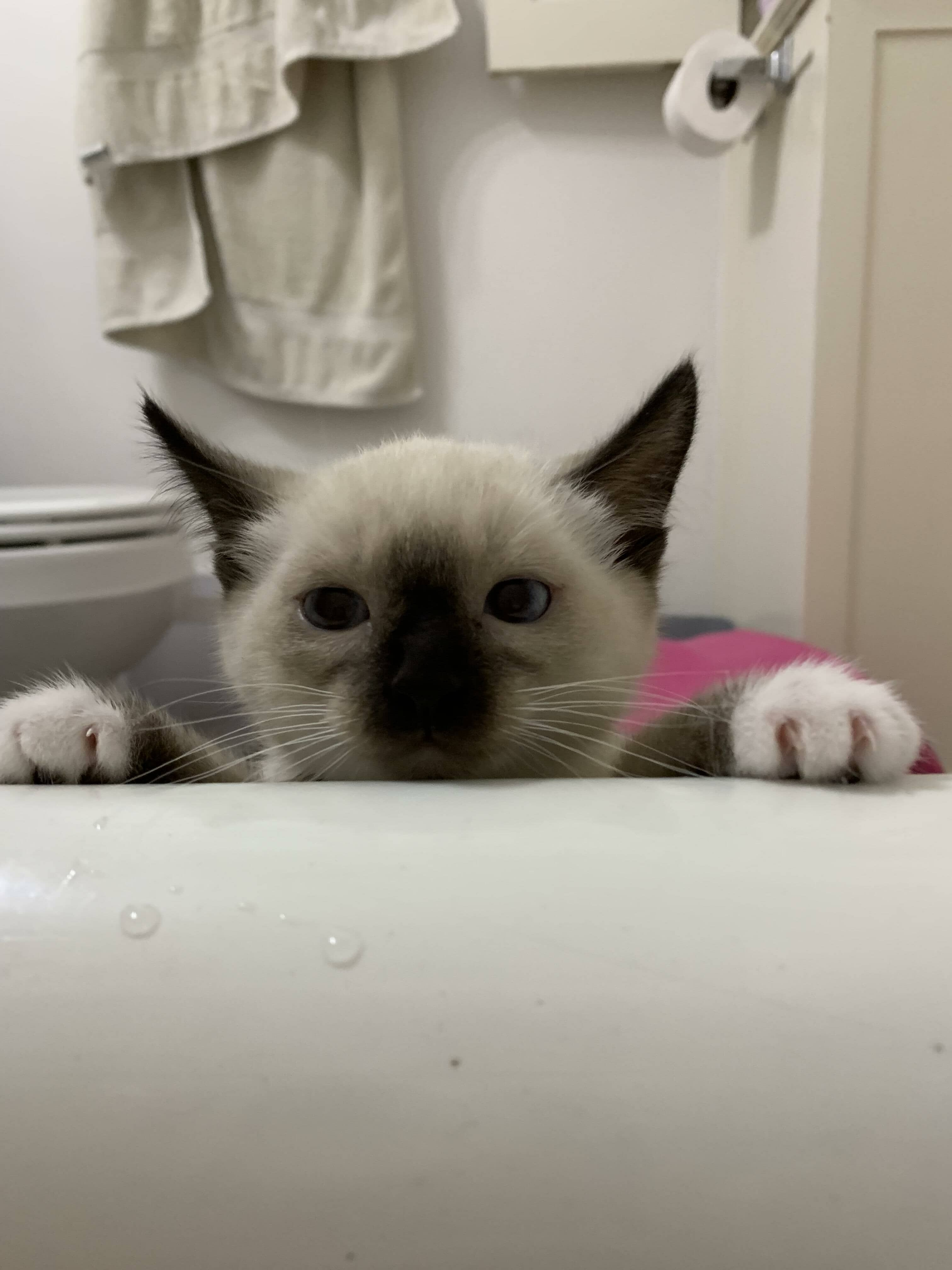 Tavi My 11 Week Old Kitten Does Not Understand Why Anyone Would Take A Bath On Purpose On Cat M Funny Cat Memes Cute Cats And Dogs Funny Cat Fails