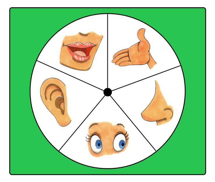 4e44d388e2f244baff8607a5f0b5da5a Jpg 736 623 Preschool Activities Lap Book Templates Senses Preschool