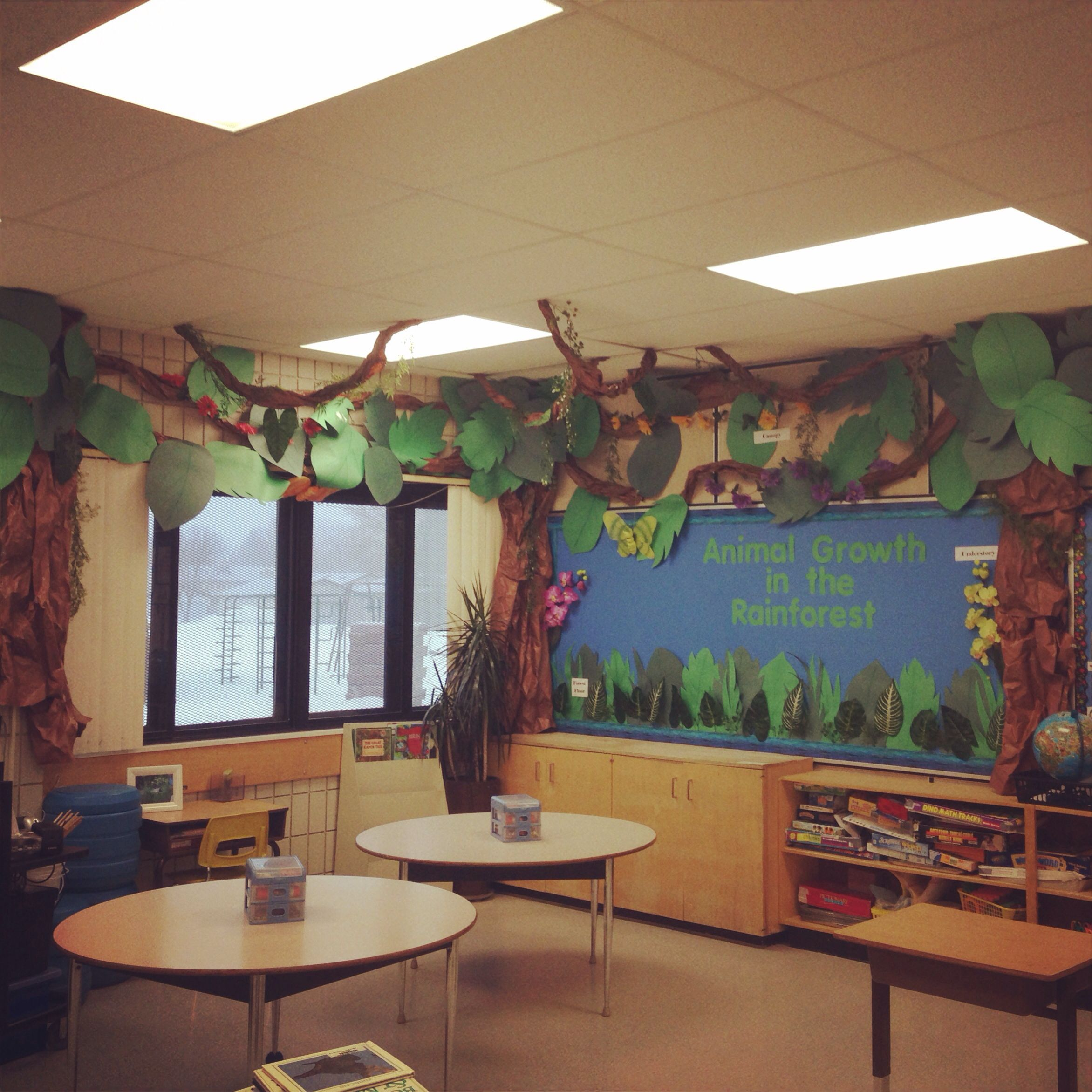 Classroom Decorating Forest Theme ~ My rainforest classroom animal growth in the