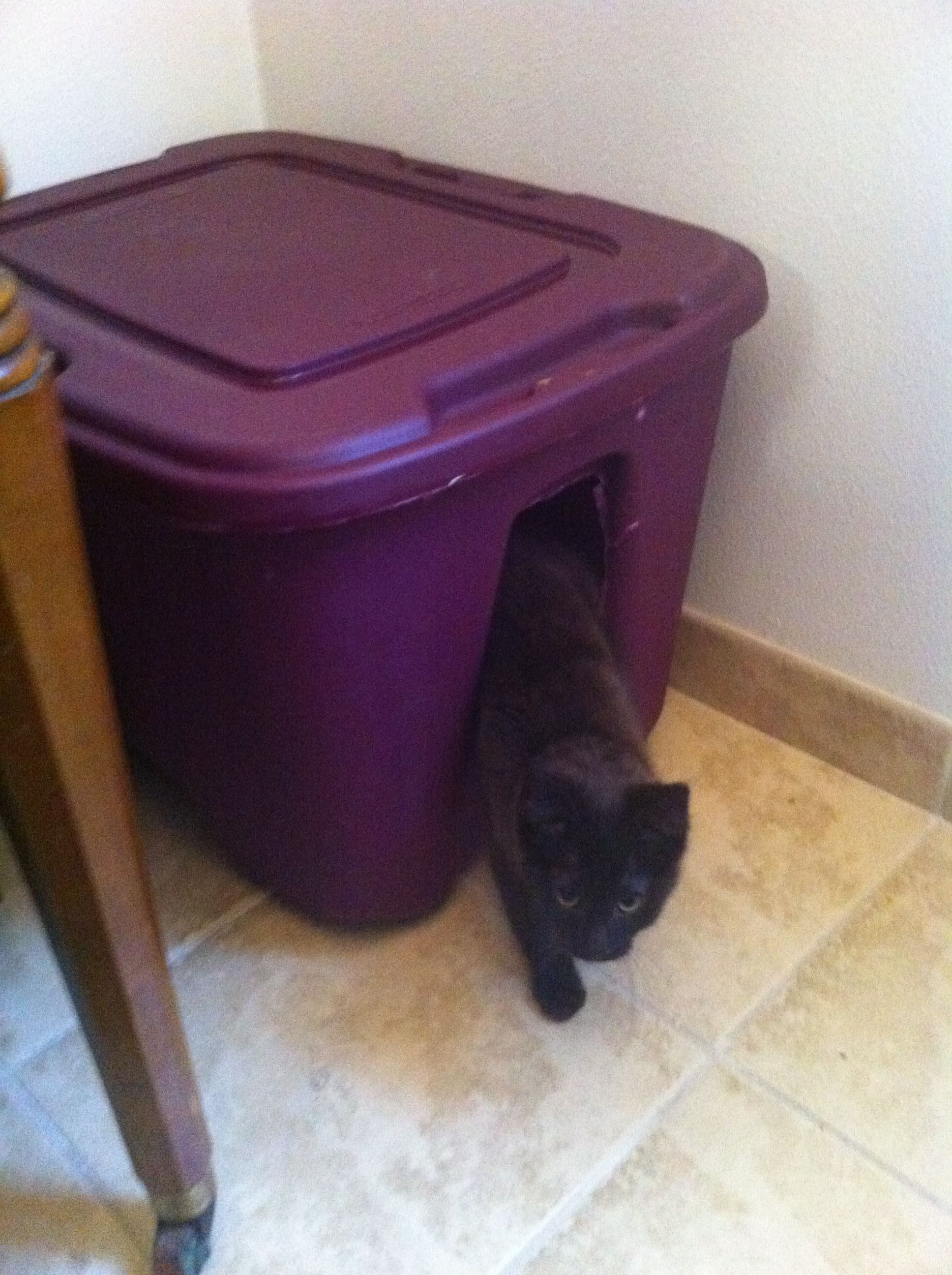 Diy Cat Litter Box Hideaway On The Cheap I Couldn T Find Those Planter Litter Boxes So I Just Used This The Box Pan I Cat Litter Box Cat Scratcher Litter Box