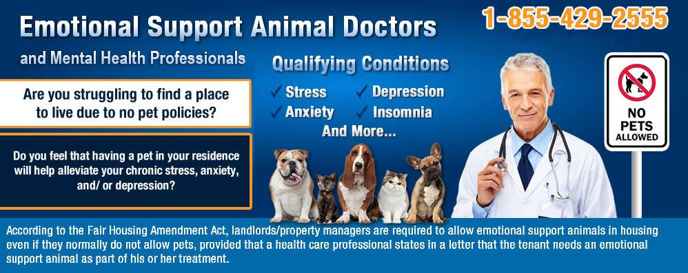How It Works Online Emotional Support Animal Approval