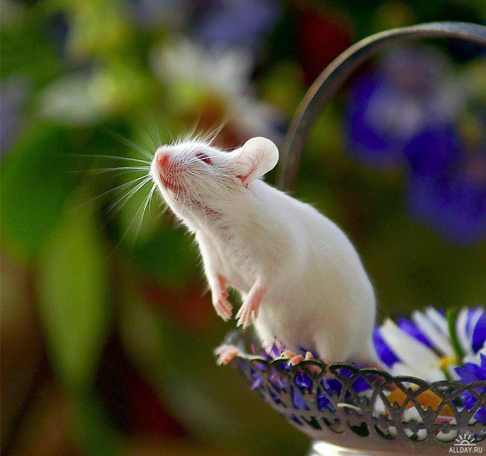Мышки фото красивые и смешные