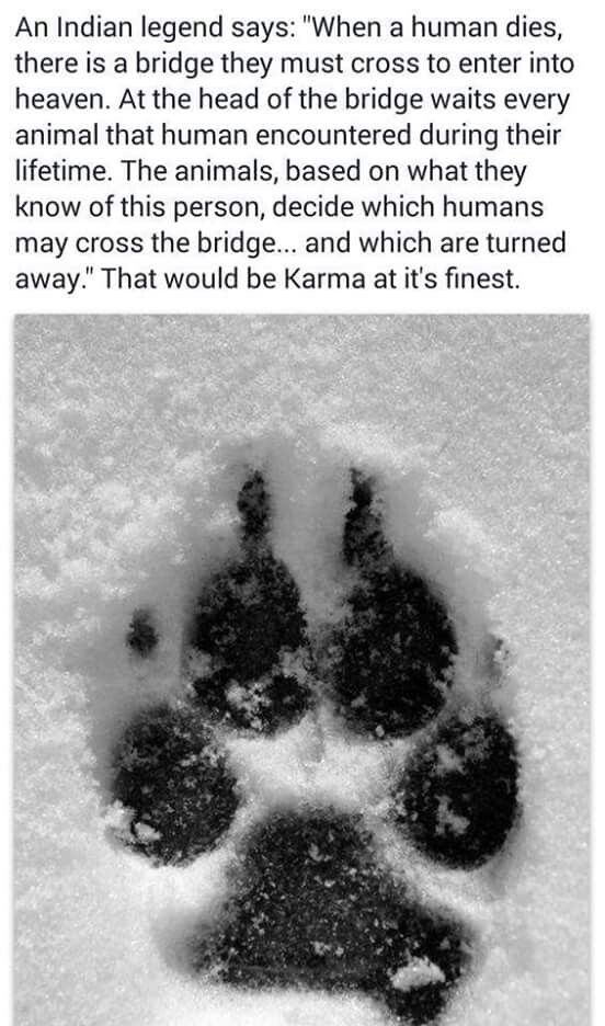 I Absolutely Love This Can You Imagine How Wonderful This Would Be If True All Those Horrible People Who Treat Animal With Cr Dog Love Animals Beautiful Pets
