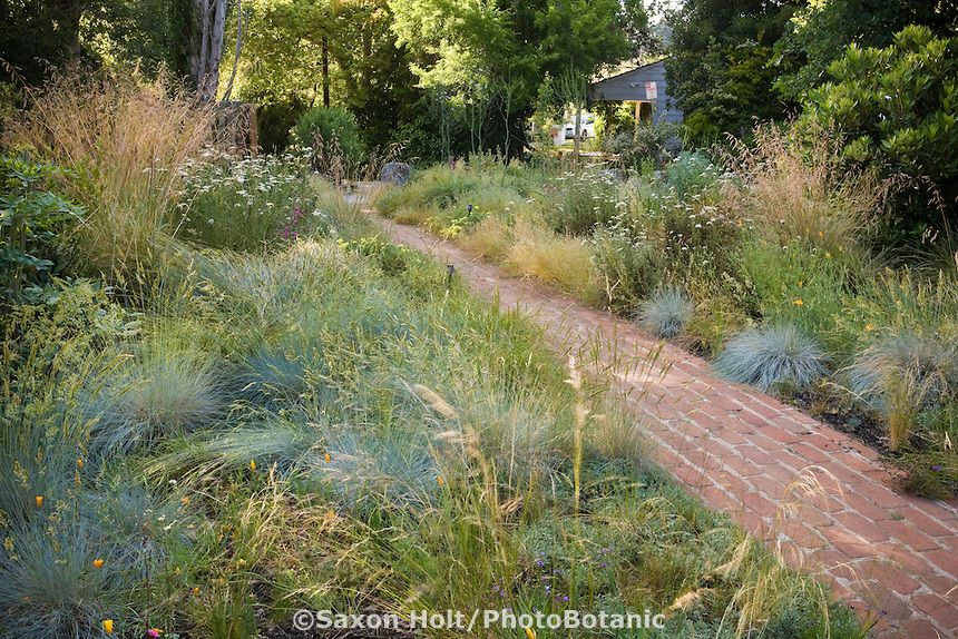 Brick path through california native plant front yard for Wild grass gardens