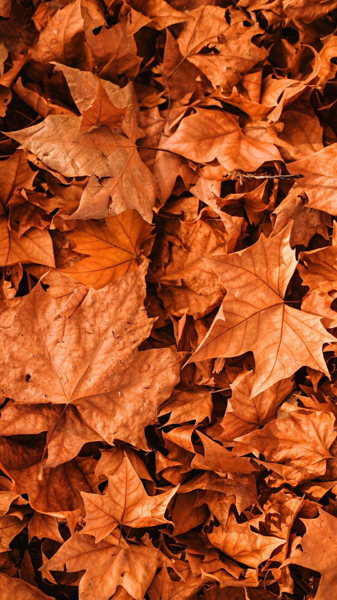 Aesthetic Fall Background Picture #fallbackgrounds
