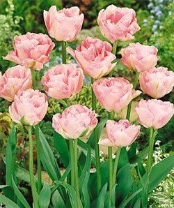 24 Of The Best Pink Flowers For Your Garden Tulips Flowers Pink Flowers