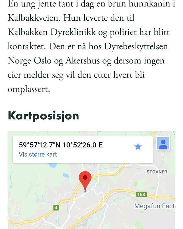 kalbakken oslo kart Brun kanin funi #Kalbakken #Oslo. (link: http://dyrebar.no  kalbakken oslo kart