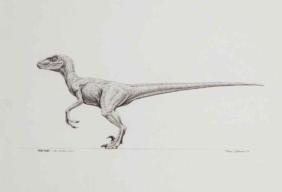 Jurassic Park Velociraptor   Lobos   Pinterest   Lobos