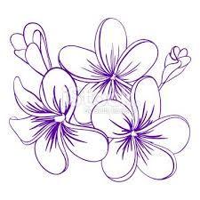 Risultati Immagini Per Plumeria Flowers Tattoo Tattoo Pinterest