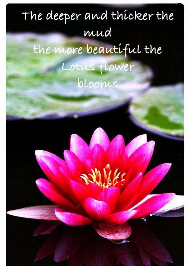 Lotus Flower Quotes Metaphor for Life Lotus Flower quote | Blossom McBloom | Water  Lotus Flower Quotes