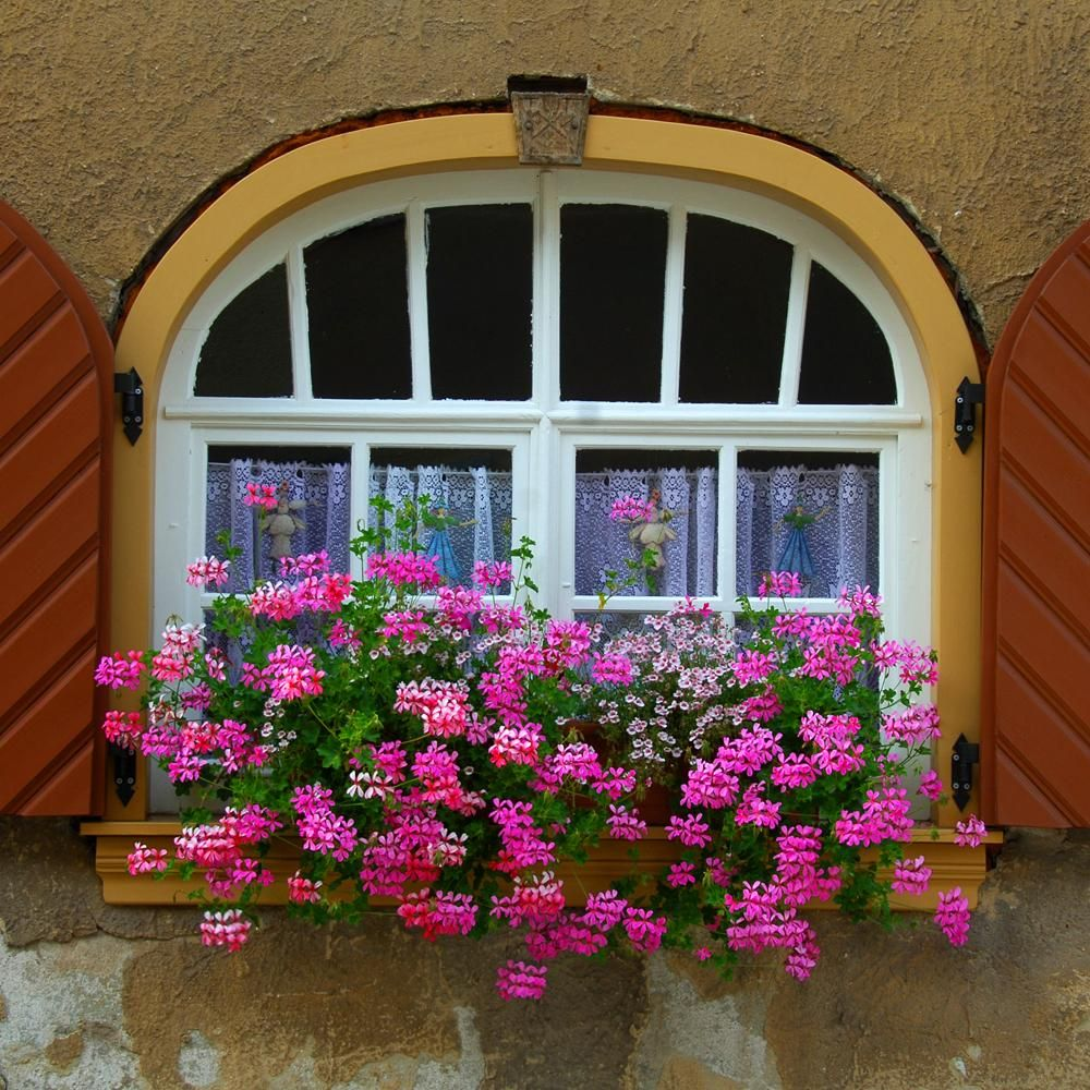 Flower Window Baskets : Images window boxes ed goodfellow web europe