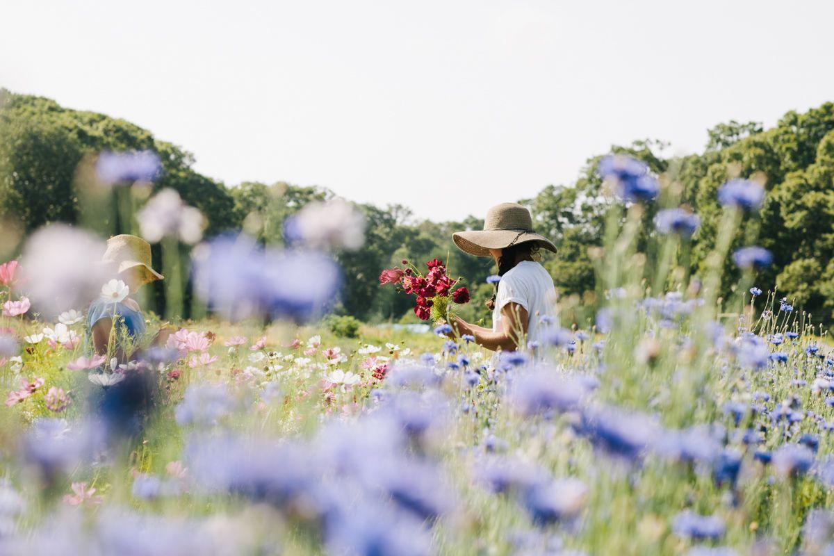 Elizabeth Cecil | Tealane Farm, Martha's Vineyard
