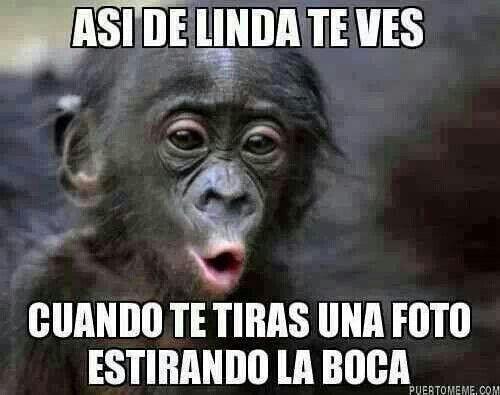 Funny Monkey Meme In Spanish : Blaaaaa memes spanish humor memes and humor