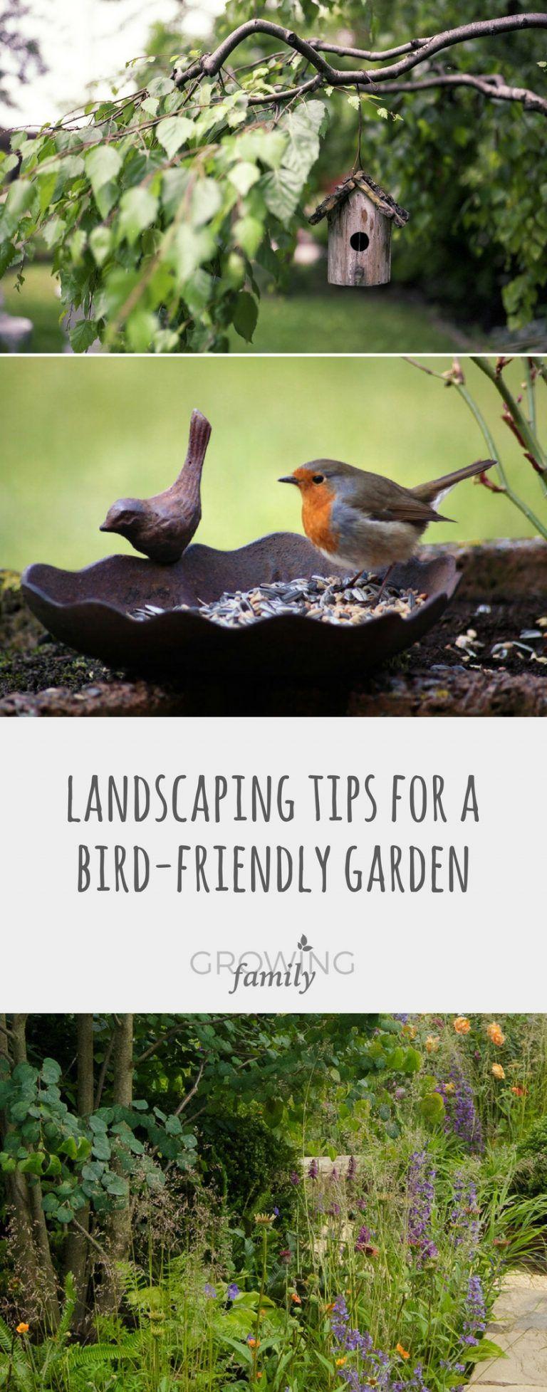 BirdFriendly Garden Landscaping Small garden birds