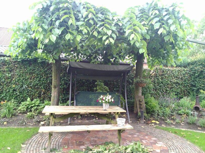 Parasolboom In Tuin : Onder de parasol boom nieuwe tuin ideeen
