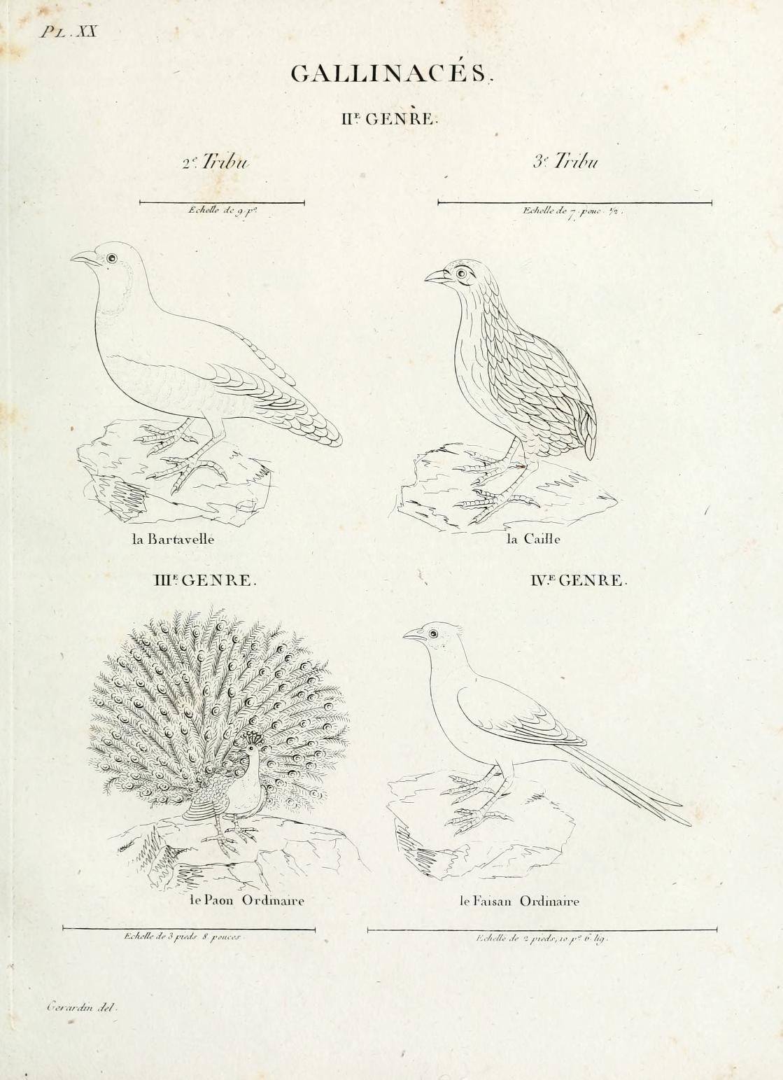 site de rencontre pour les ornithologues site de branchement Las Vegas