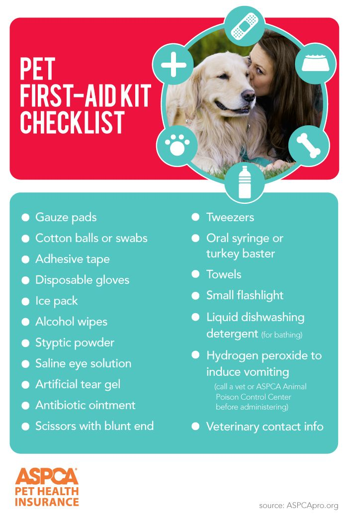Pet First Aid Basics Pet Health Pet Care Tips Pets First