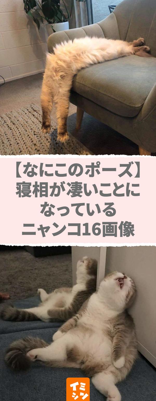 【なにこのポーズ】寝相が凄いことになっているニャンコ16画像。【その寝相、エキセントリック!】すごい寝姿で眠る猫が笑える、可愛い&面白画像。 Pinterest hash tags (max 8): #寝姿 #猫 かわいい #猫 寝相 #面白画像 #笑える #エキセントリック