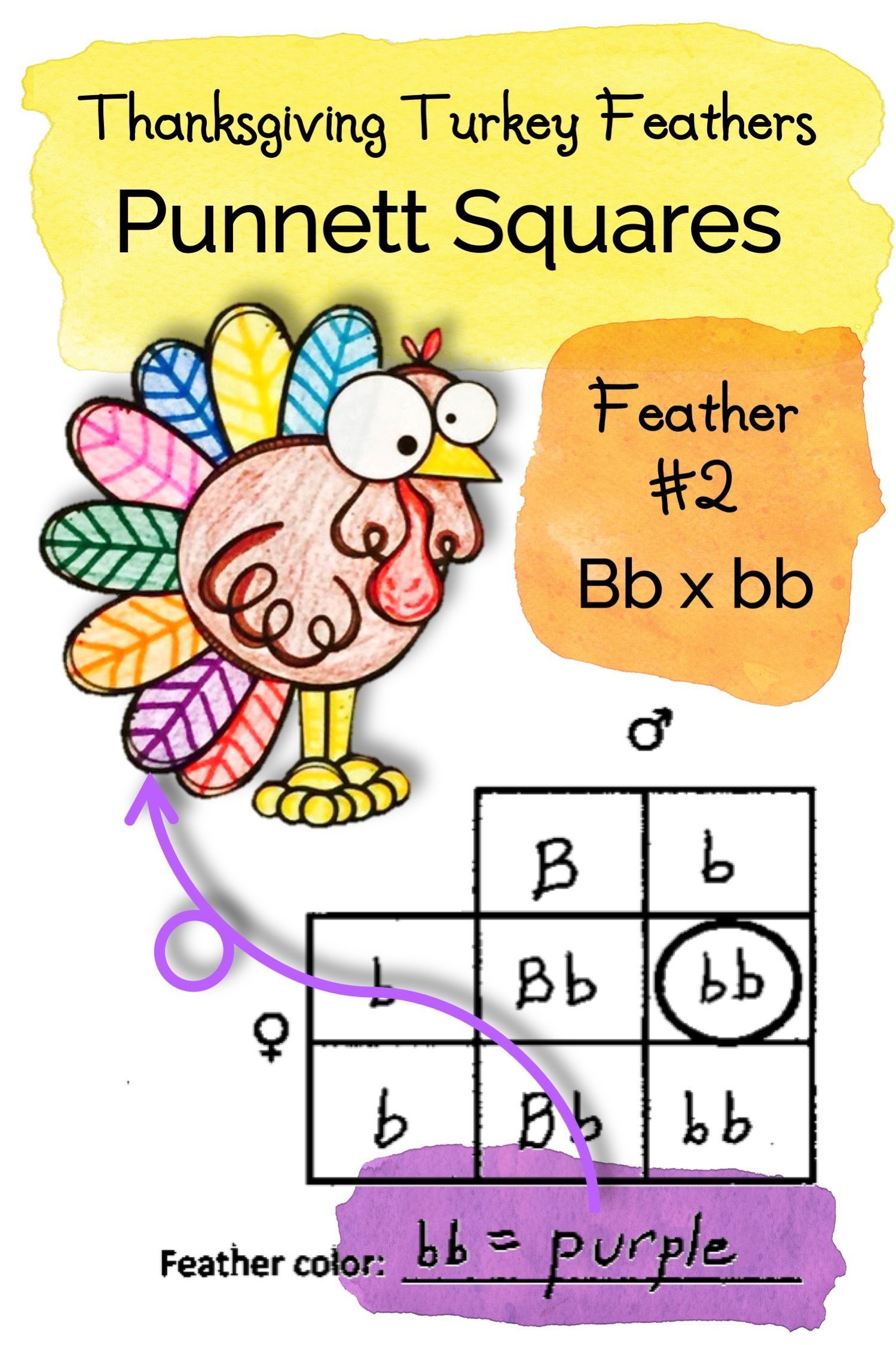 Thanksgiving Science Activity Using Punnett Squares To Build A Turkey Science Activities Punnett Squares Free Science Worksheets [ 2249 x 1499 Pixel ]