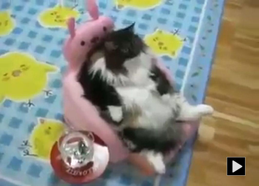 Lazy FAT cat watching TV