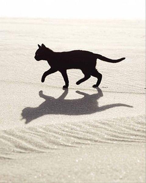 BLACK CAT WHITE BEACH