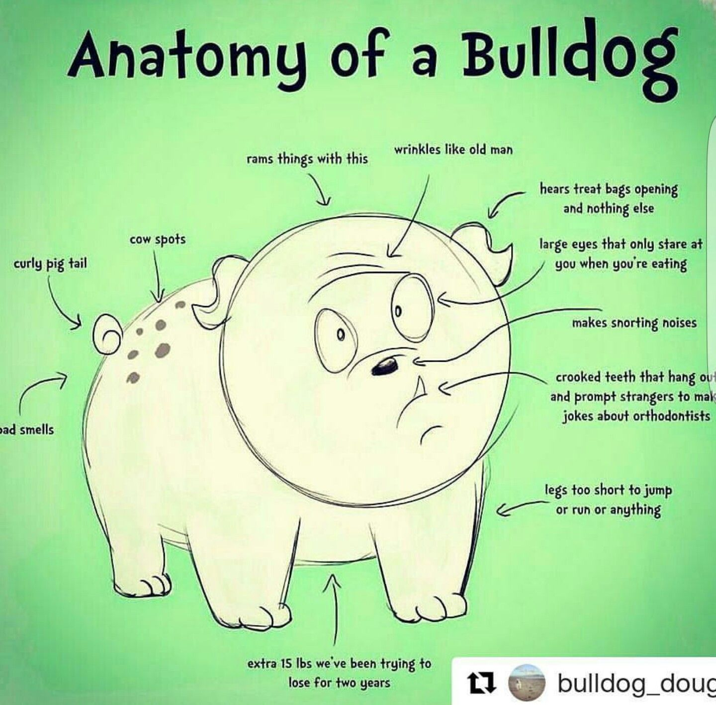 Pin by Caroline Frome on All Things Bulldog