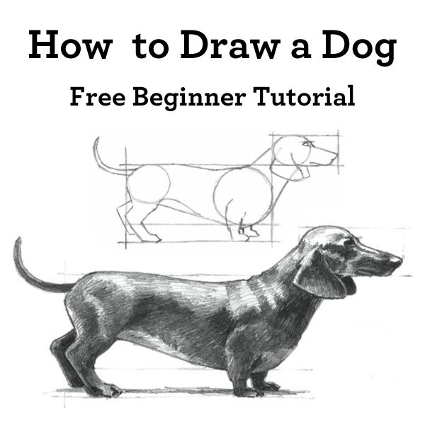 How To Draw A Dog A Mini Demonstration Fine Art Instruction