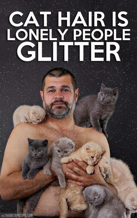 Cute Cat and Funny Cat: Cat hair is lonely people glitter.