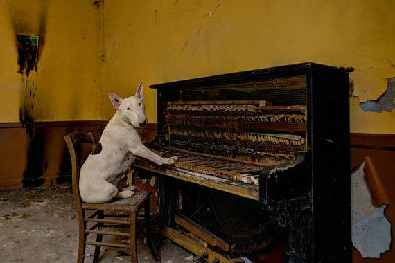 廃墟を冒険するブル・テリア犬、廃屋のソファーで微笑む【画像】 ルクセンブルグのカフェがあった廃墟でピアノを弾くクレア