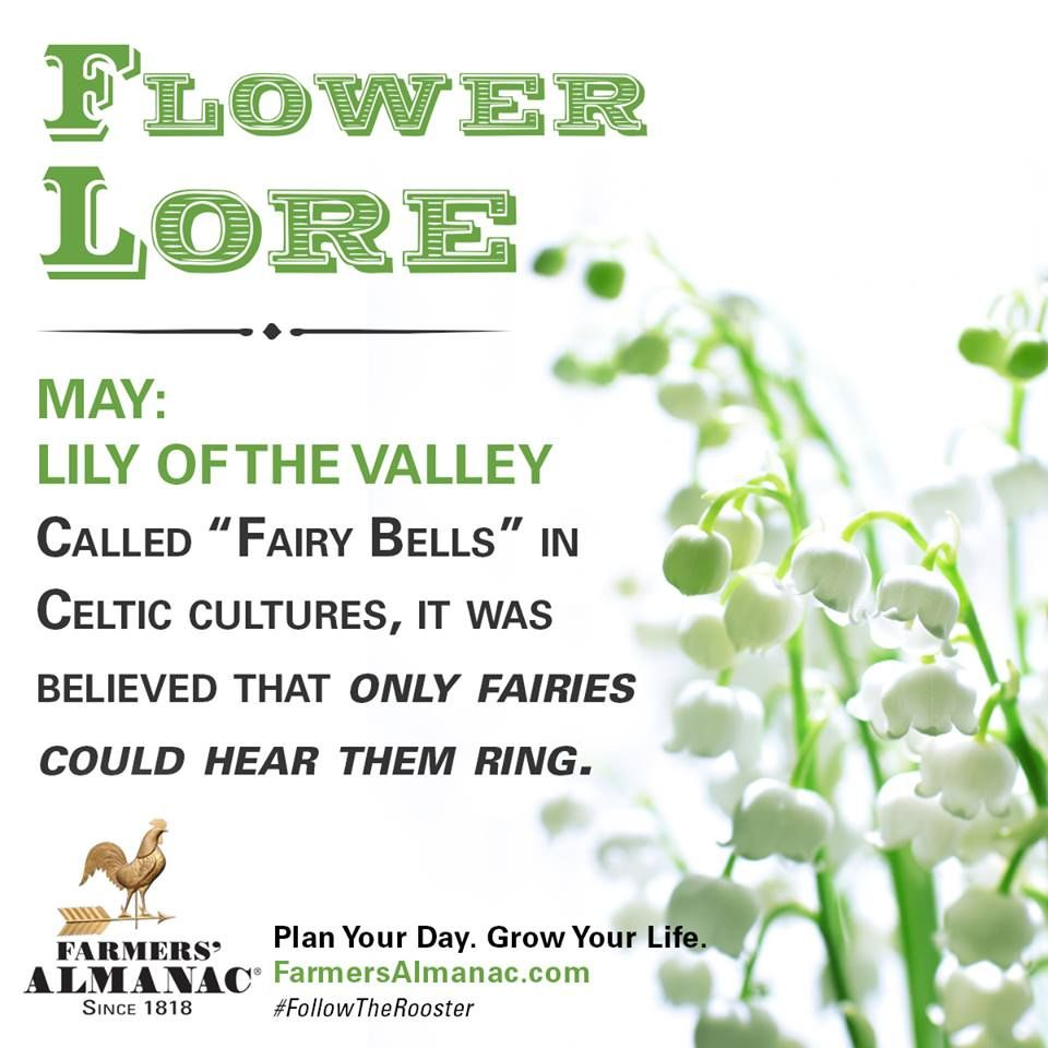 Flower lore may lily of the valley lily of the valley