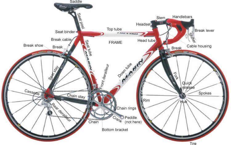 Bicycleanatomy Roadeg 750473 Bicycle Pinterest Bicycling