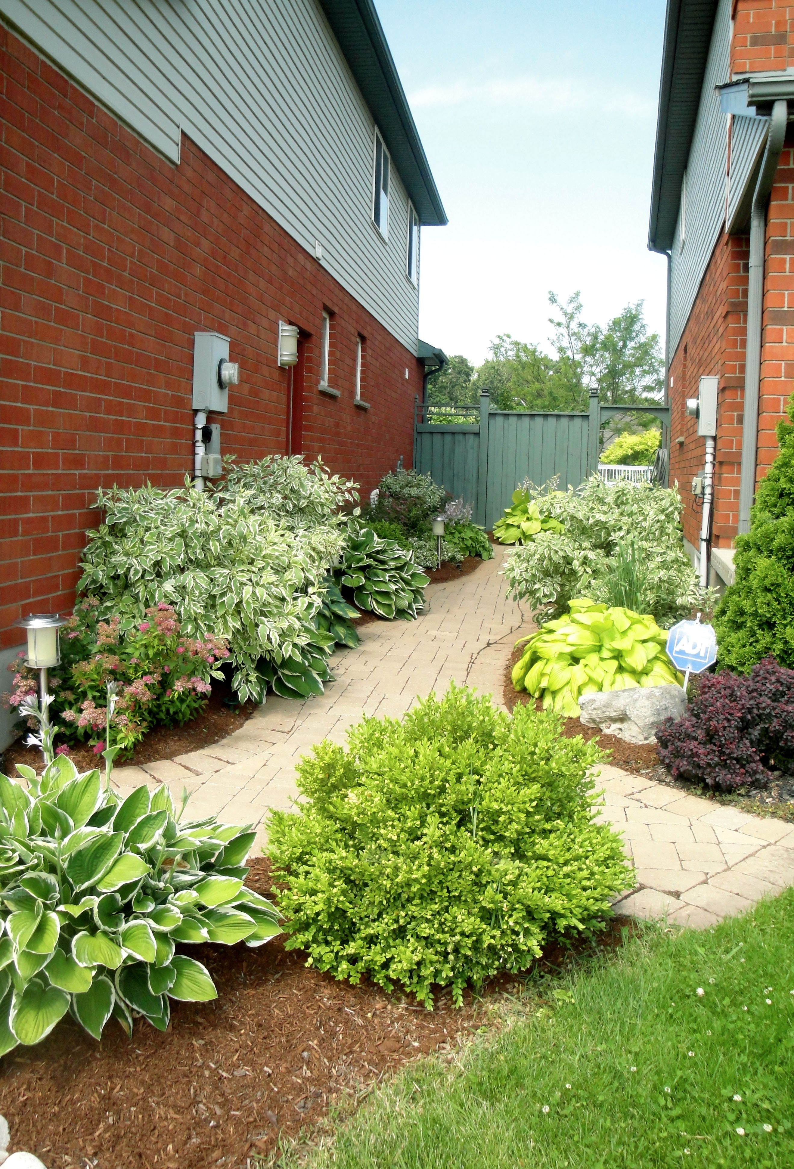 A Shared Backyard Entry Way Made The Best Use Of The Minimal Space Between These Neighbours Planting On Outdoor Landscaping Landscape Services Backyard Plants