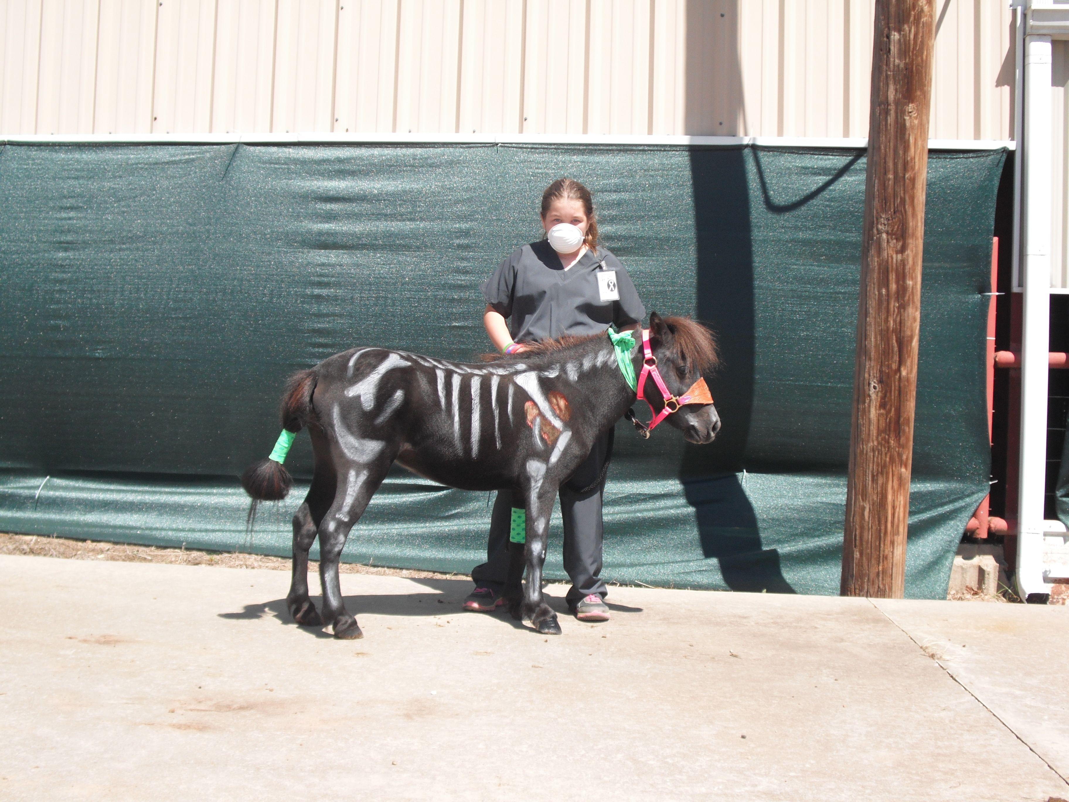 Robin Equine Costume Superhero Outfit for Mini Pony Horse   Mini Horse Costume