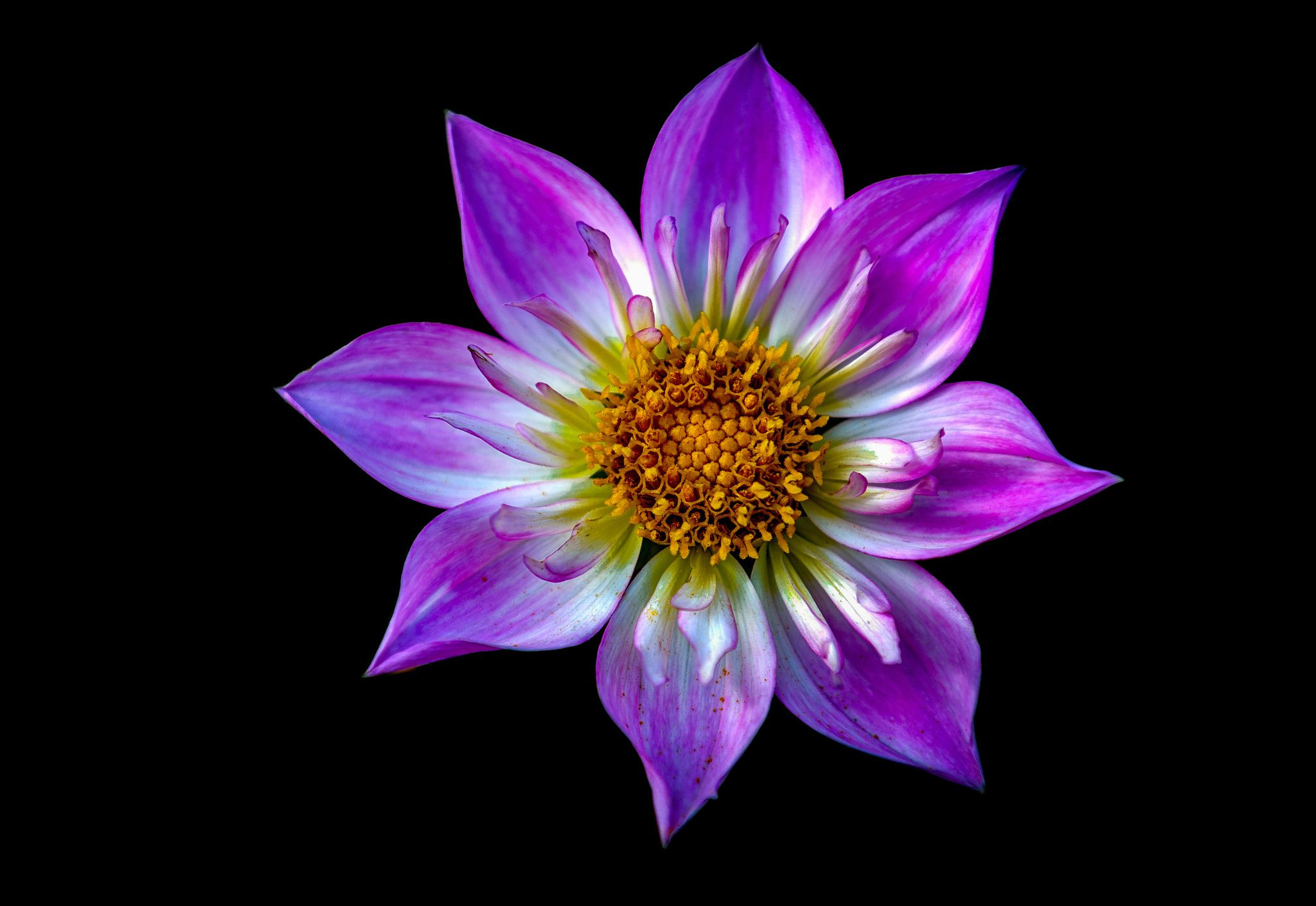Dhalia by Ido Meirovich on 500px Flower photos, National