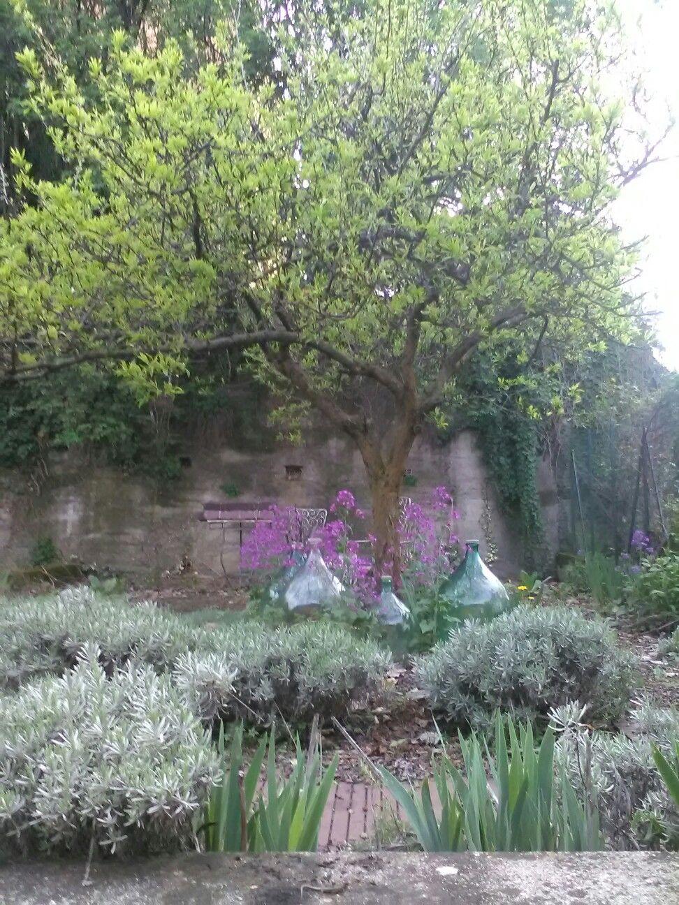 Photo of Piccolo giardino in stile provenzale