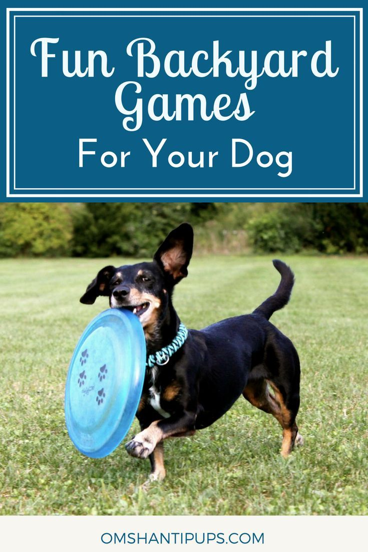 Entertaining Backyard Games To Play With Your Dog Dog