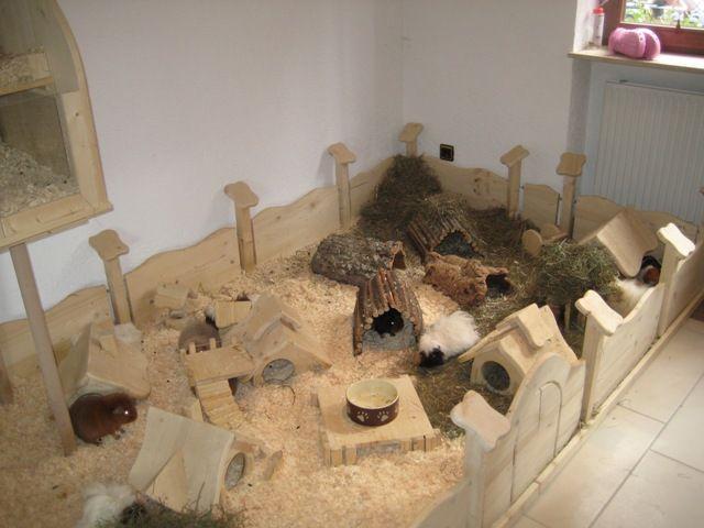 schweinchenhausen baby guinea piggies 39 cages pinterest. Black Bedroom Furniture Sets. Home Design Ideas