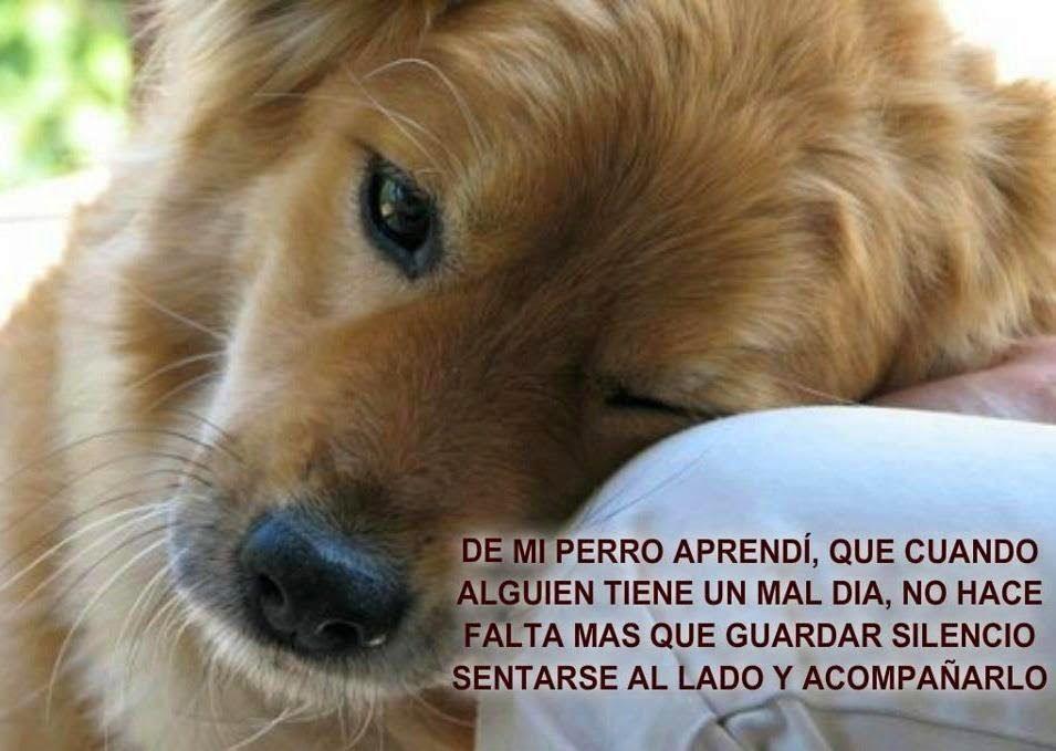 Imagenes De Perros Con Frases Para Amigos Fieles Dog Poems Dog People Cute Cats And Dogs