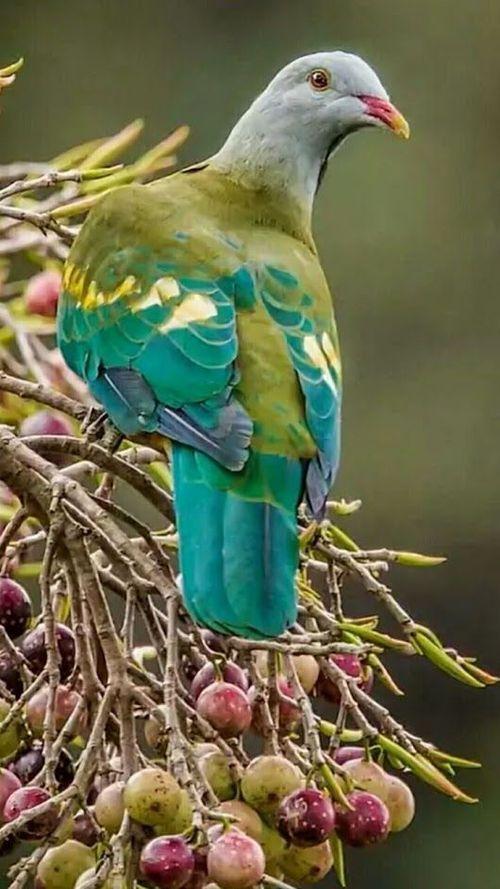 Jay On Imgfave Burung Burung Liar Binatang Cantik