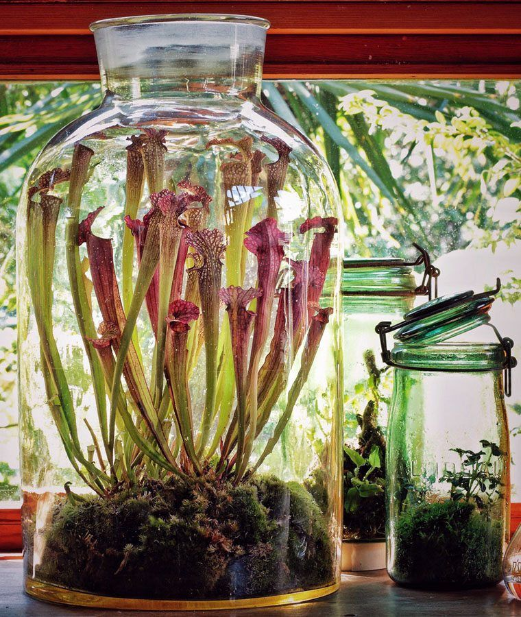 How To Make A Carnivorous Plant Terrarium Garden Plants