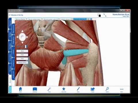 http://www.fisioterapiatualcance.es/ Isquiotibiales, anatomia e ...