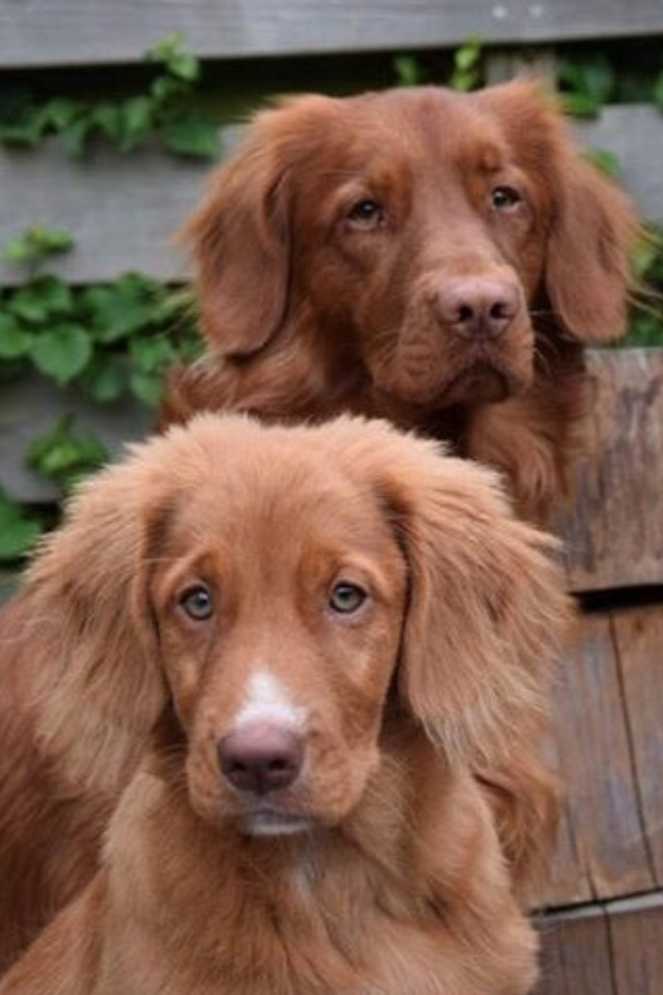 Name this breed! These beautiful brothers are our