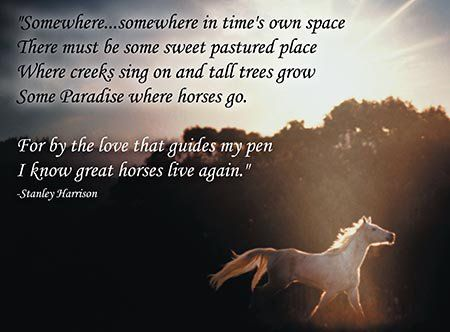 Condolences Loss Of Horse Quotes QuotesGram Barn Stuff Enchanting Vikings Condolences Quote