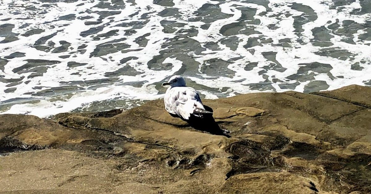 Showcasing the Best Beaches of La Jolla La jolla san diego