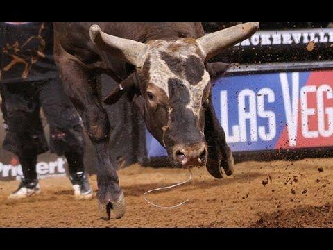 World Champion Bull Bushwacker Launches Pbr S Brendon